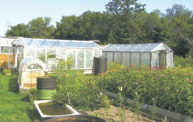 Все эти тыквы, баклажаны, помидоры, перцы, дыни Любовь Георгиевна Кузнецова (на фото сверху) вырастила в теплицах и парниках на двух сотках своего огорода
